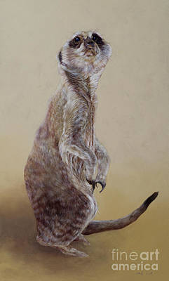 Meerkat Wall Art - Painting - Meerkat Two by Odile Kidd