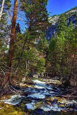 Wall Art - Photograph - Merced River Surrounded By Trees by Roslyn Wilkins