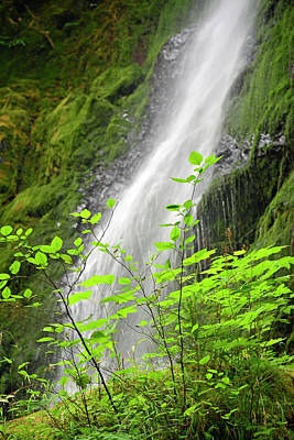Photograph - Merriman Falls Olympic National Park E by Bruce Gourley