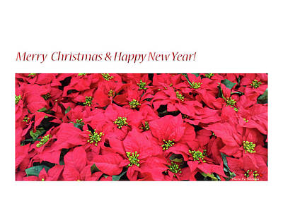 Wall Art - Photograph - Merry Christmas And Happy New Year by Rhonda McDougall