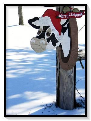 Wall Art - Photograph - Merry Christmas Cow by Dene Brock