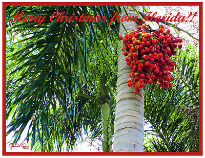 Photograph - Merry Christmas From Florida by Susan Molnar