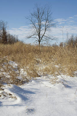 Photograph - Merwin Snowy Tract by Dylan Punke