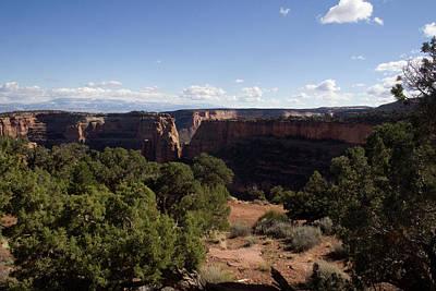 Photograph - Mesa Canyon Greens by Dylan Punke