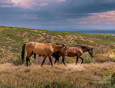 Photograph - Mesa Verde Wild Horses #3 by Blake Webster