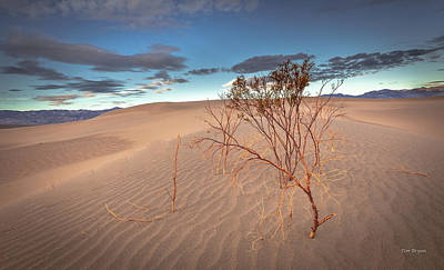 Photograph - Mesquite Dunes Morning by Tim Bryan