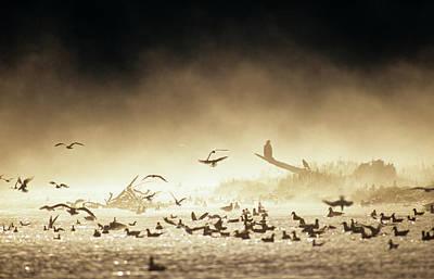 Eagle Photograph - Mew Gulls And Bald Eagles Feeding On by Ian Mcallister