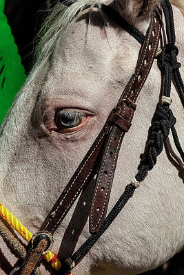 Photograph - Mexican Day Parade Nyc 9_16_2018 Horse by Robert Ullmann