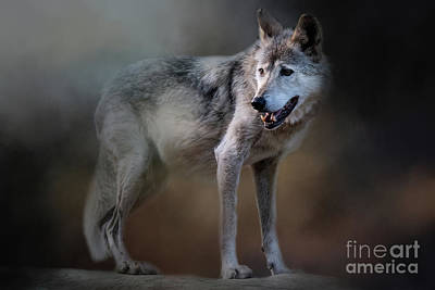 Photograph - Mexican Wolf by Ed Taylor