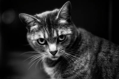 Photograph - Mia The Shelter Cat by John Rodrigues