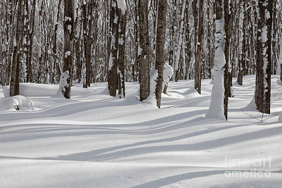 Photograph - Michigan Winter by Jim West