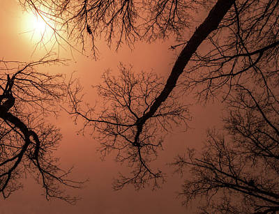 Photograph - Midwest Trees On Fire by Jean Noren