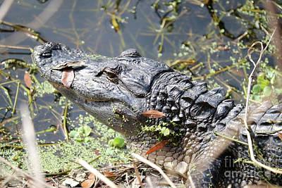 Photograph - Mighty Gator by Carol Groenen