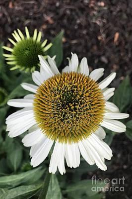 Photograph - Mighty Macro Flower  by Carol Groenen
