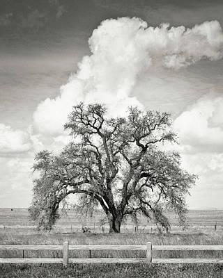 Photograph - Mighty Oak Tree by Darin Ashton Photography