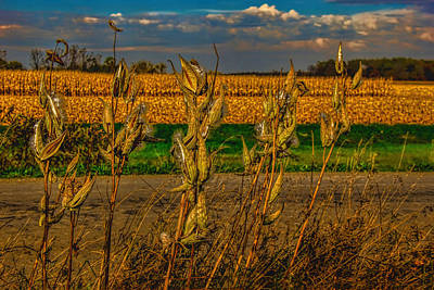 Photograph - Milkweed And Corn Harvest by Pat Cook
