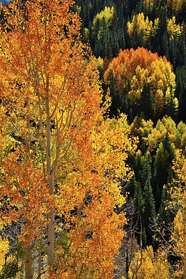 Photograph - Million Dollar Highway Glowing Aspens by Ray Mathis