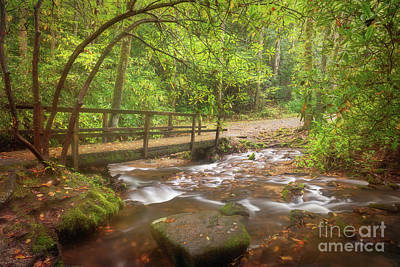 Photograph - Mingus Creek by Sharon Seaward