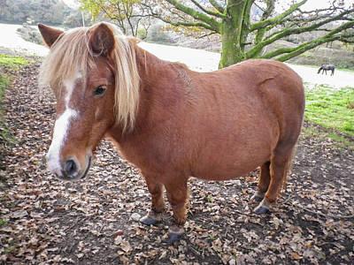 Photograph - Miniature Pony Tamar Valley Devon by Richard Brookes