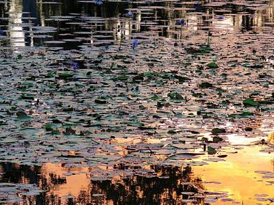 Photograph - Minnamoolka Sunset Reflection Water Lilies by Joan Stratton