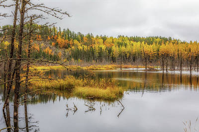 Photograph - Minnesota Gold by Susan Rissi Tregoning