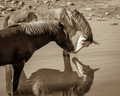 Photograph - Mirrored Souls by Mary Hone
