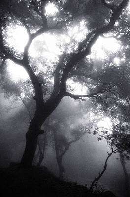 Photograph - Mist Filled Forest by John Glembin
