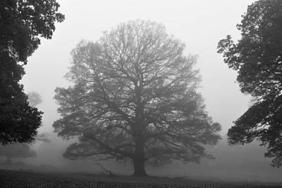 Photograph - Mist In Park Monochrome by Marek Stepan
