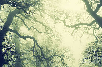 Photograph - Misty English Oaks by Tim Gainey