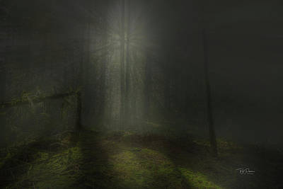 Photograph - Misty Forest by Bill Posner