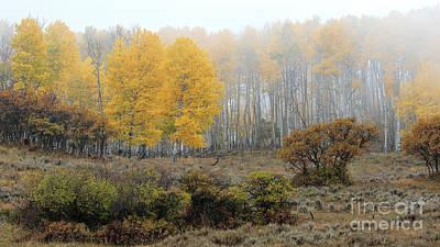 Photograph - Misty Morn by Jim Garrison