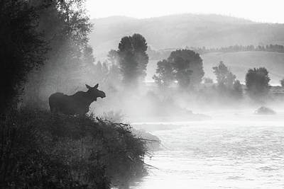 Photograph - Misty Morning Moose by Mary Hone