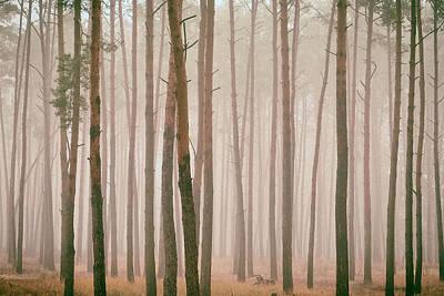 Misty Pines. Horytsya, 2018. Art Print