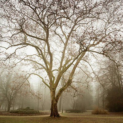 Photograph - Misty Tivoli Park by Ian Middleton