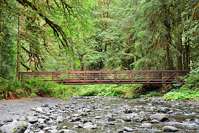 Photograph - Marymere Creek Bridge Oympic National Park by Bruce Gourley