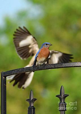 Louis Armstrong - Mocking Bluebird Photo Bomb by Cindy Treger