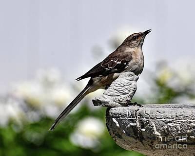Cartoons Tees - Mockingbird Mocking A Bird Statue by Cindy Treger