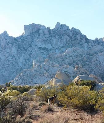 Photograph - Mojave National Preserve by Sagittarius Viking
