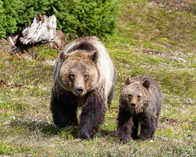 Photograph - Mom And Cub by Mary Hone