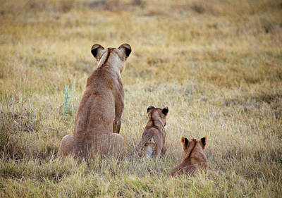 Photograph - Mom And Cubs by John Rodrigues