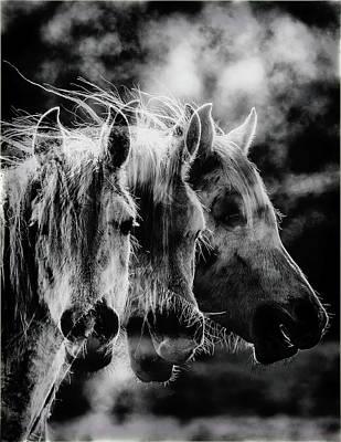 Photograph - Mon Amie by Jorg Becker