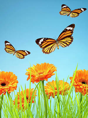 Flying Photograph - Monarch Butterflies With Grass And by Chris Stein