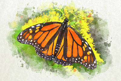 Mixed Media - Monarch Butterfly by Christina Rollo