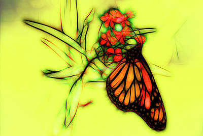 Photograph - Monarch Butterfly Graphic Sketch by Kay Brewer