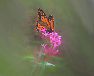 Mixed Media - Monarch Butterfly On A Pink Flower by Pamela Walton