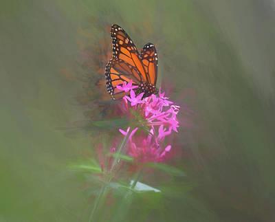Mixed Media - Monarch Butterfly On A Pink Flower by Pamela Walton