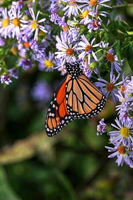 Photograph - Monarch Butterfly Vertical  by Carol Montoya