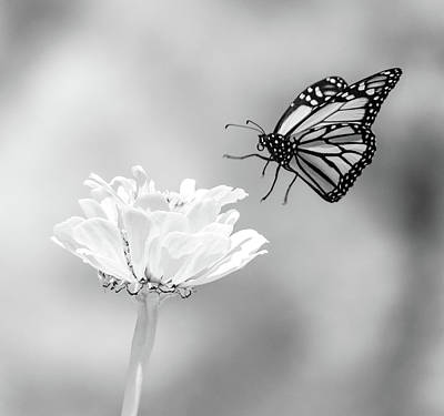 Photograph - Monarch In Infrared 6 by Brian Hale