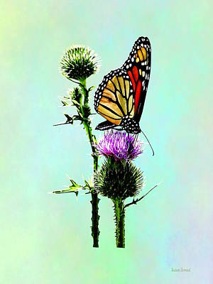 Photograph - Monarch On Thistle by Susan Savad
