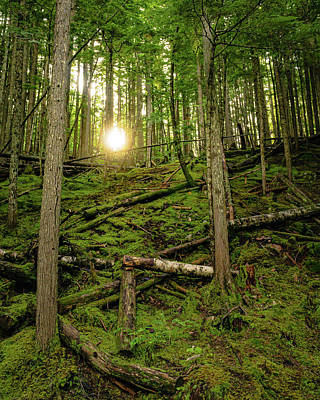 Photograph - Monashee Forest Portrait by Dave Matchett